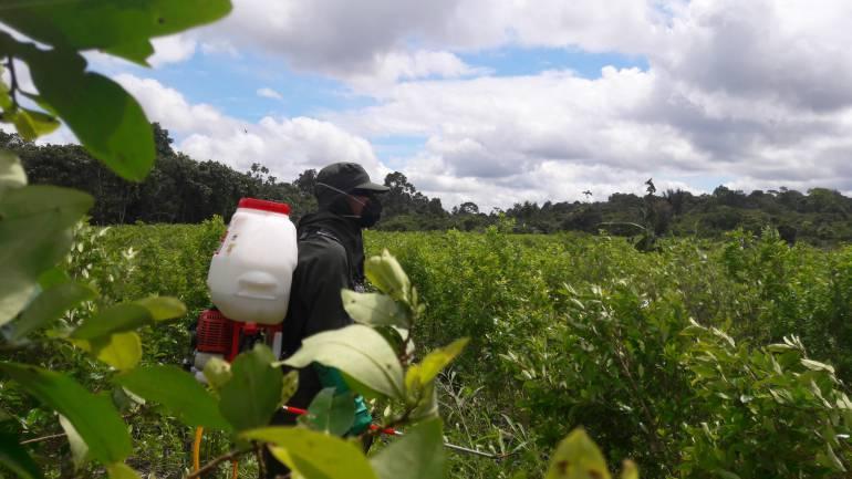 Colombia erradicación de coca: Firman acuerdo para erradicar 674 hectáreas de coca en Guaviare