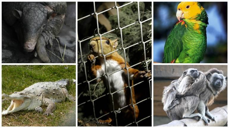 tráfico de fauna: Los animales más afectados por el tráfico de fauna