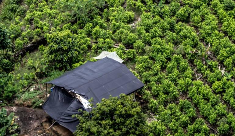 Arranca plan de sustitución de cultivos ilícitos en enclave de las FARC