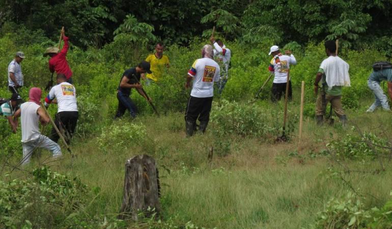 En San José del Guaviare 500 familias más se sumarán voluntariamente la sustitución de cultivos