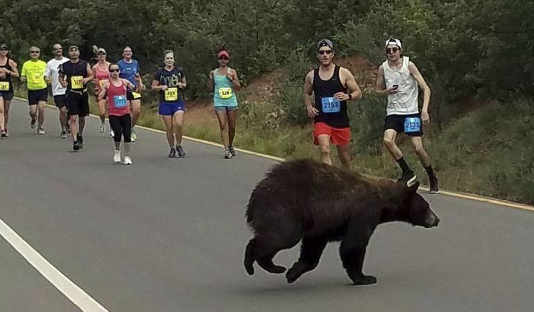 oso en una carrera en ee.uu.: Un oso se atraviesa en una carrera en Colorado