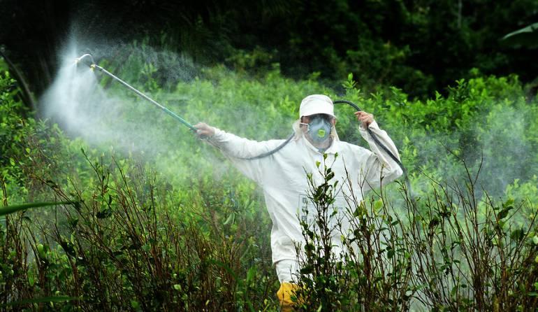 Erradicación manual de cultivos ilícitos: Así va la erradicación manual de coca en parques nacionales