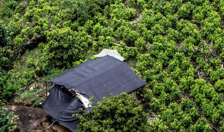 Cultivos de coca aumentan en 52% — Colombia