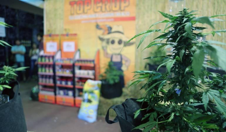 Venta de marihuana en farmacias de Uruguay