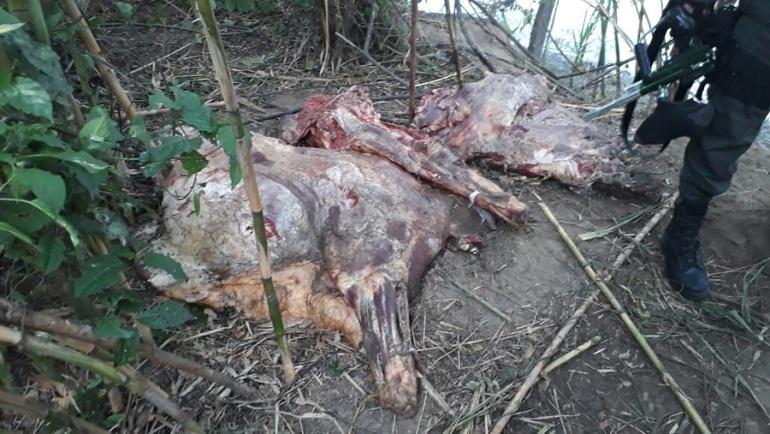 Siguen decomisando carne de contrabando procedente de Venezuela: DIAN