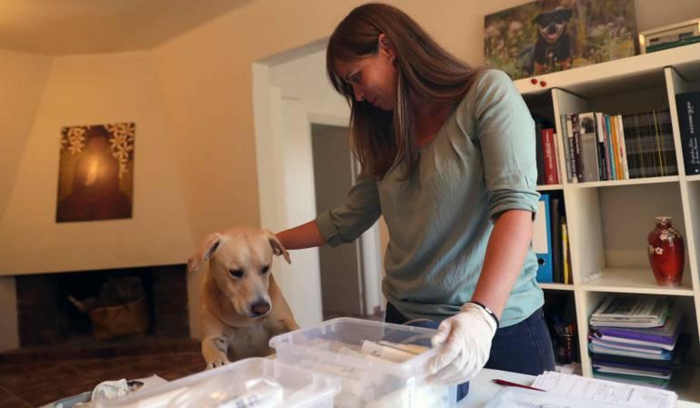La especialista en perros de asistencia y detección Ingrid Ramon, durante un ejercicio con Blat para que éste identifique cuál de las muestras corresponde a una persona diagnosticada con la enfermedad.
