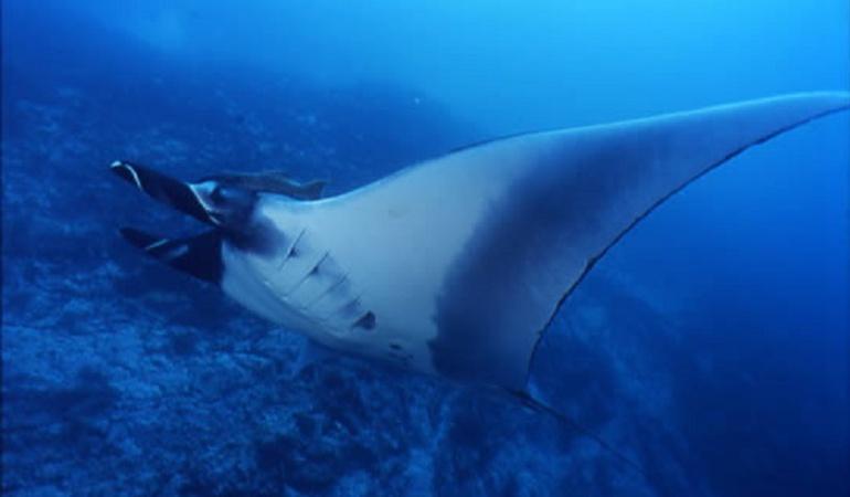 """Santuario de Fauna y Flora de Malpelo: El Santuario de Fauna y Flora de Malpelo es ahora """"Refugio Oceánico Global"""""""