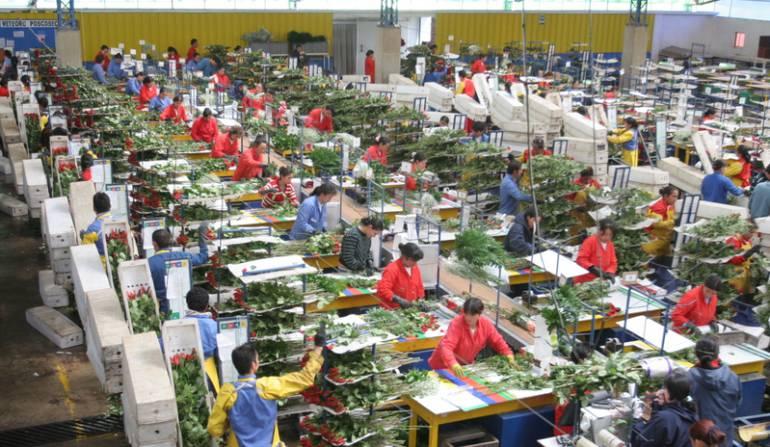 Exportaciones de flores: Exportaciones de flores podrían alcanzar los US$ 1.400 millones en 2017