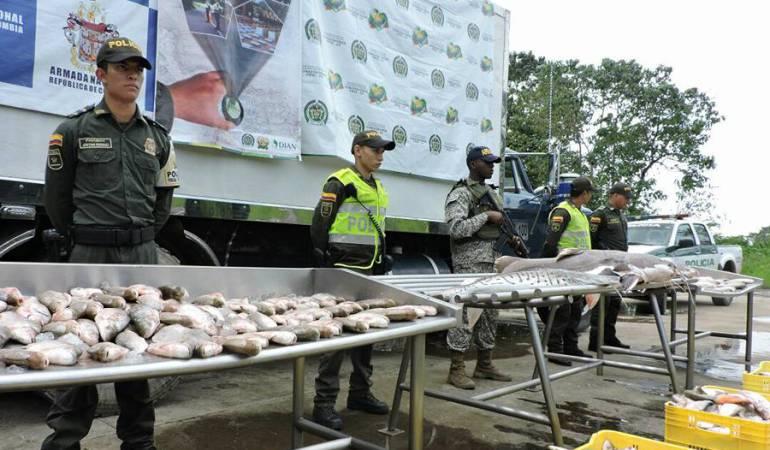 Pescado, Arauca, decomisación: Por mala higiene se decomisan 1.500 kilos de pescado en Arauca