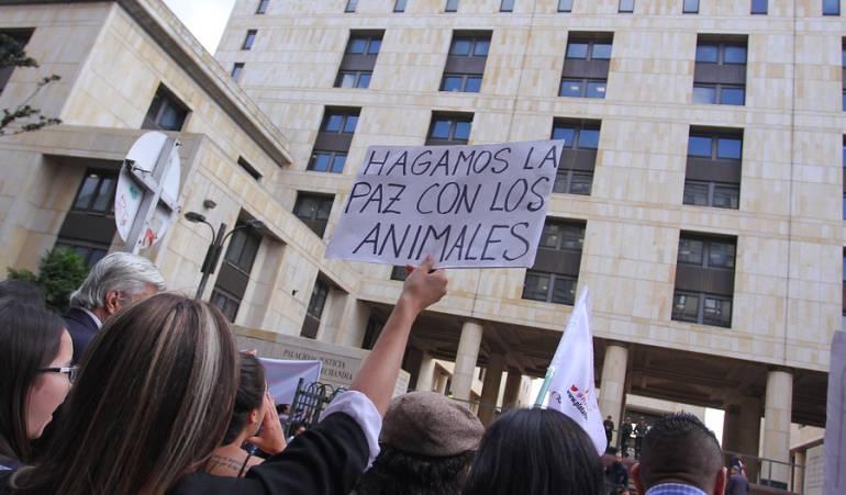 Meta y Guaviare cacería del Delfín: Cruel y despiadada cacería de delfín rosado en ríos del Meta y Guaviare