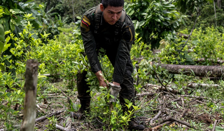 Erradicación de cultivos ilícitos en Tumaco.