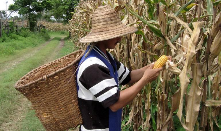Banco de Semillas del Futuro Colombia: En Colombia se construirá el primer Banco de Semillas del Futuro