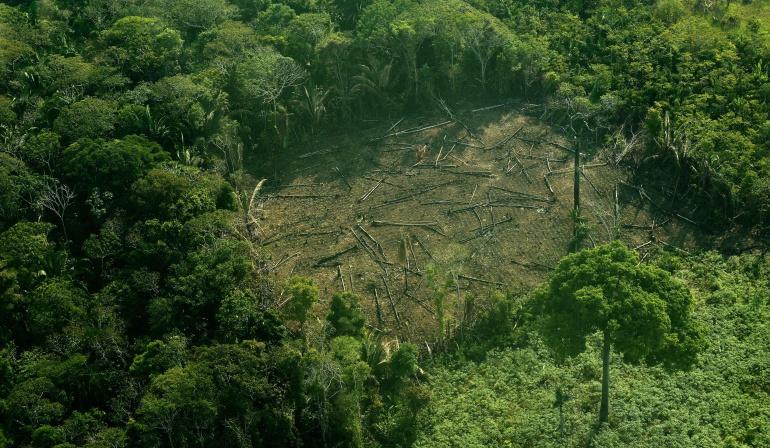 TFA 2020 Colombia, una alianza nacional contra la deforestación