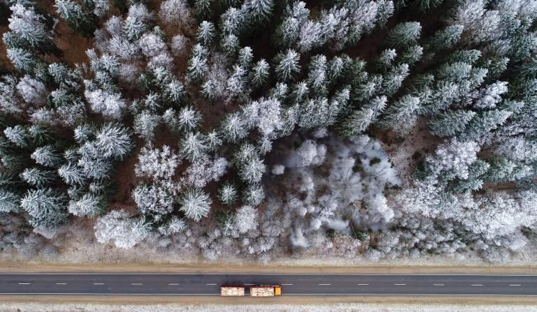Sembrar árboles en Reino Unido: Reino Unido encabeza proyecto para la reforestación del país