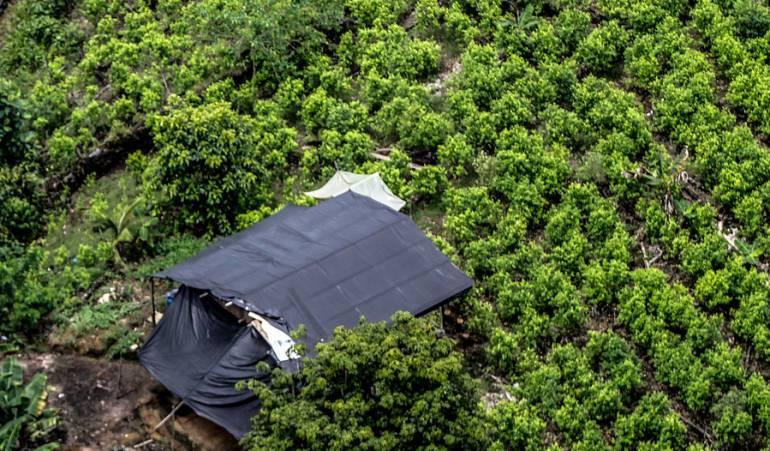 Narcotrafico: Colombia produce 100 toneladas de cocaína al año