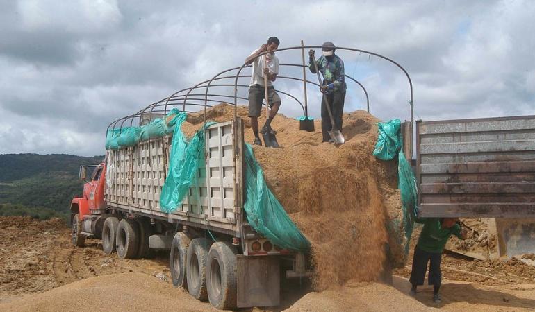 Se realiza la primera exportación de arroz a Canadá