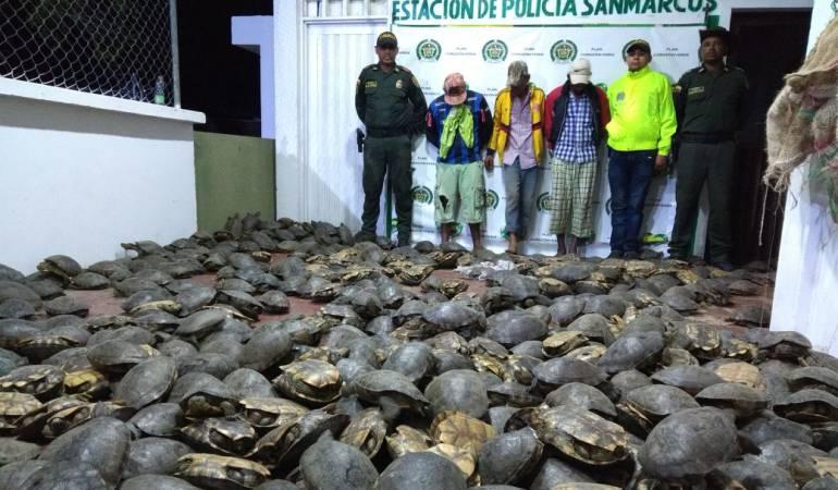 Fauna Colombiana: Capturan a tres supuestos traficantes de especies en vía de extinción