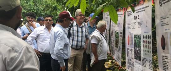 Cultivos ilícitos: Arauca es el segundo departamento exitoso en sustitución de cultivos