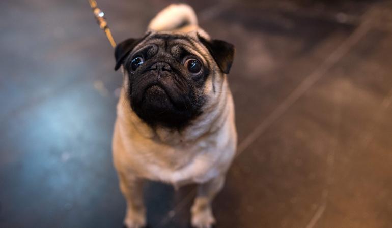 Perro saludo nazi: Joven enseña a perro saludo nazi y es enviado a la cárcel