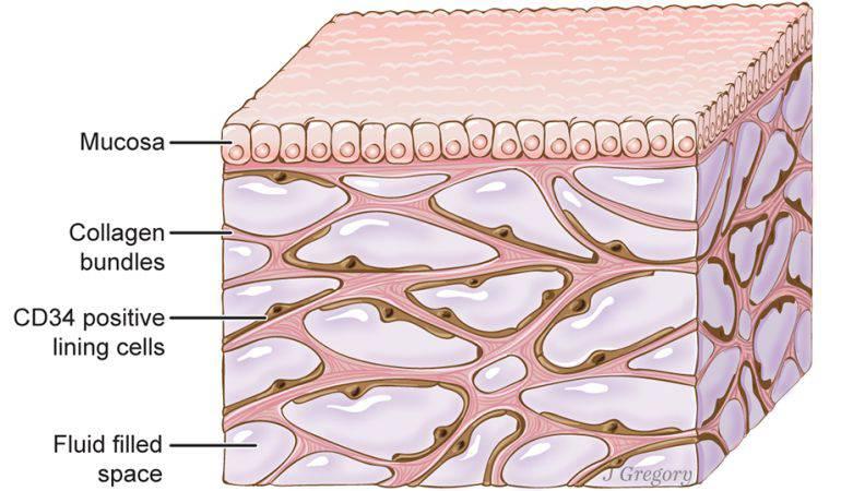 Medicina: Descubren un nuevo órgano bajo la superficie de la piel