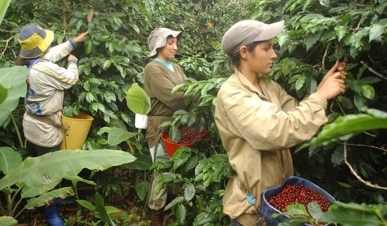 Precio del café: Gobierno descarta reactivar el programa de protección del ingreso cafetero