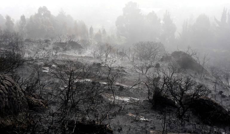 Deforestaciones: Acciones urgentes contra la deforestación en Amazonía pide la Procuraduría