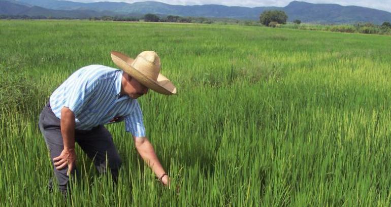 Precipitaciones cultivos precios: Fuertes precipitaciones ya han afectado a cultivos y precios de alimentos