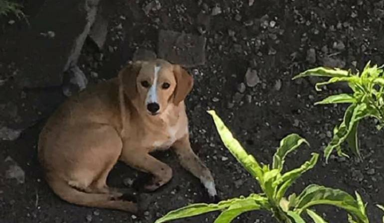 Maltrato Animal: Mujer les corta las patas a sus perros para que no escarben en el jardín