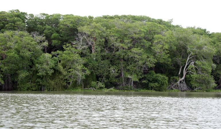 Pesca Ríos Guaviare: Veda en ríos del Guaviare, establece autoridad pesquera