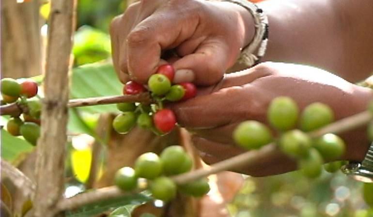 Cafeteros Estabilización: Cafeteros buscan implementar el Fondo de Estabilización de precios del café