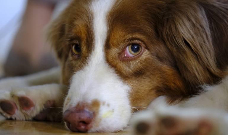 El Mejor amigo del hombre: Hombre afirma que su perro le disparó mientras jugaban