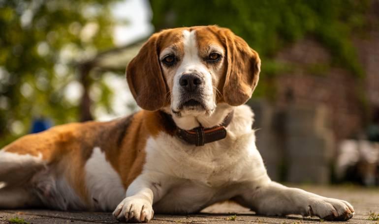 Maltrato Animal: Condenan a hombre por despellejar vivo a un cachorro en Argentina
