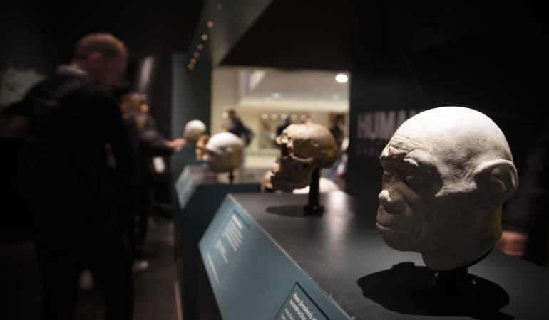 Evolución Huamana: Confirman la antigüedad del Homo antecessor: entre 772.000 y 949.000 años