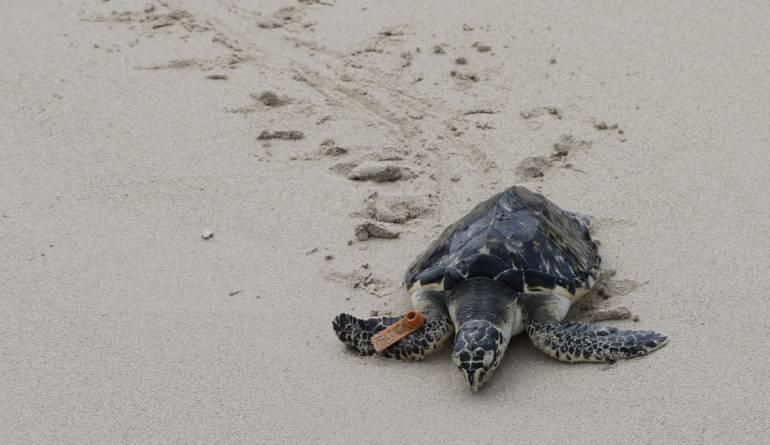 Nuevas especies de animales: Descubren nueva especie de tortuga en el oeste de México