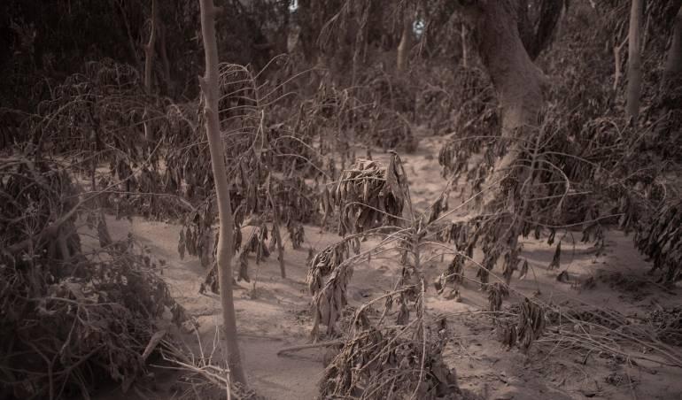 Volcán de fuego: FAO ofrece a Guatemala apoyo para evaluar daños por erupción volcánica