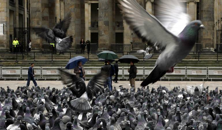 Parques con palomas: Sao Paulo multará con 50 dólares a quienes den de comer a las palomas
