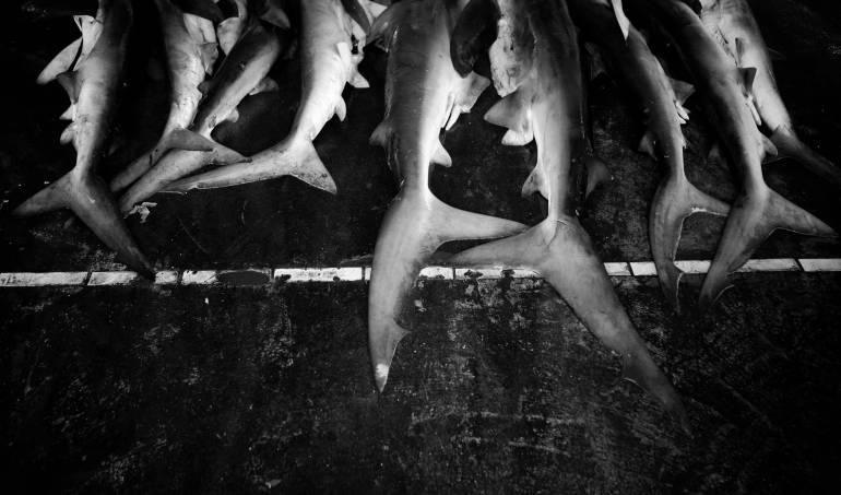 tiburones: Hallan más de 400 tiburones muertos en playas de Francia