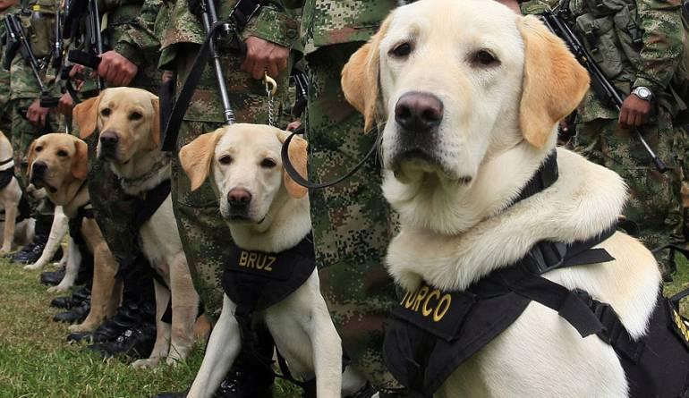 Protección animal: Reino Unido endurecerá los castigos por atacar a perros policía
