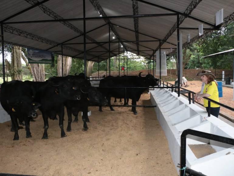 La Feria de la Ganadera abrió sus puertas al público