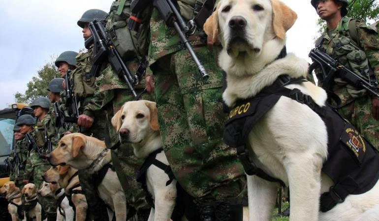 Cuerpos de Periodistas: Perros entrenados, claves para encontrar los cuerpos de los periodistas