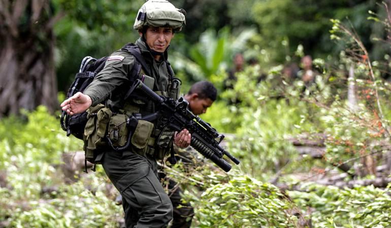 Cultivos ilícitos: Policía espera dictamen sobre licitación para erradicación forzosa