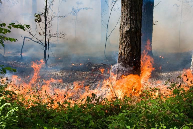 Una chispa puede provocar un incendio forestal