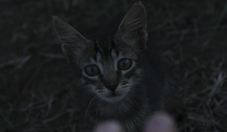 Gato.