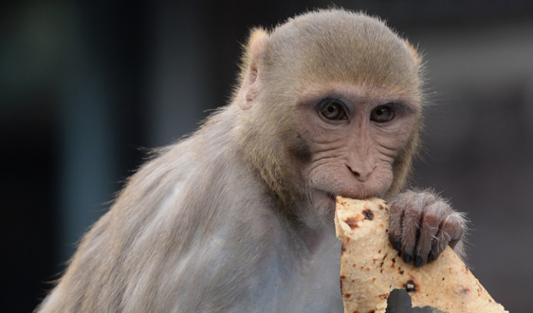 Mono en bicicleta escapa de un perro — Viral