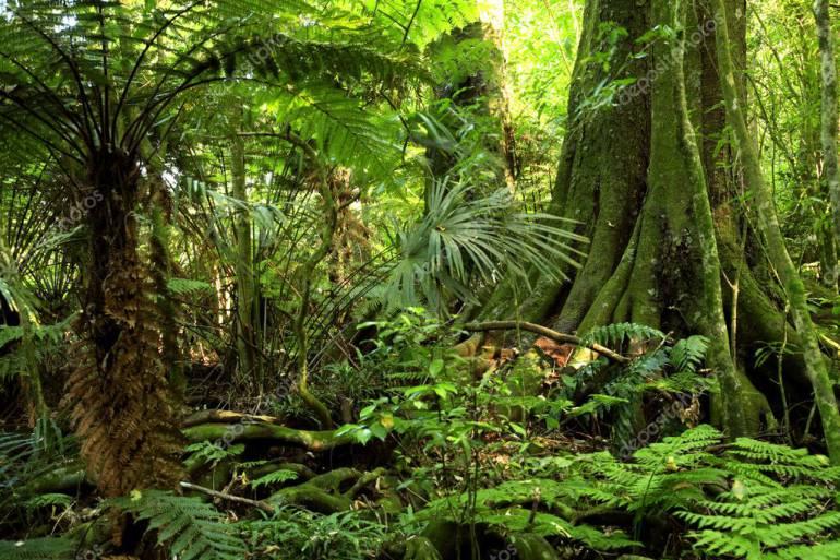 Conservar los bosques para prevenir las quemas
