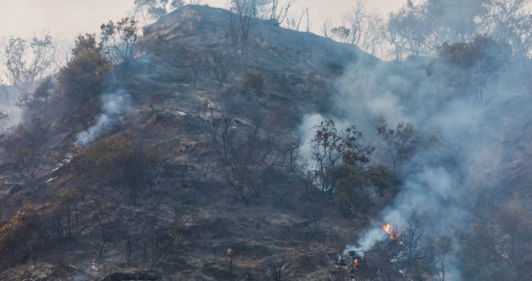Los terribles efectos de los incendios forestales