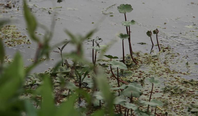 Medio ambiente: Humedales de Bogotá, declarados sitio Ramsar