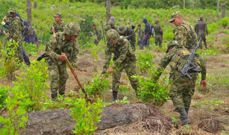 Narcotráfico: 30.000 hectáreas de coca han sido erradicadas en 2018: MinDefensa
