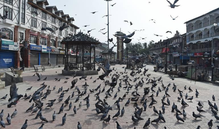 Enfermedades transmitidas por animales: Anticonceptivos, caza y halcones: el control de palomas en el mundo
