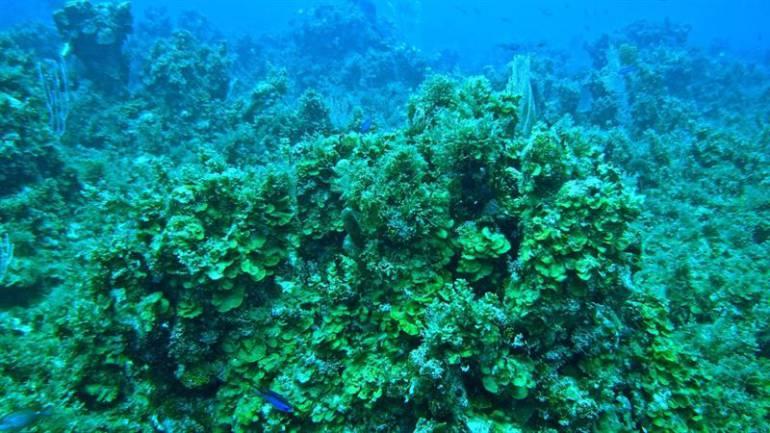 arrecifes colombianos.